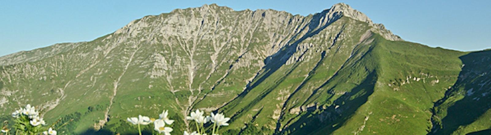 Alpe Arera Sentiero Dei Fiori